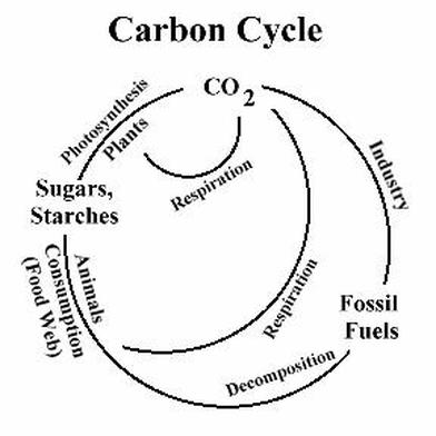 Photosynthesis, Cellular Respiration and the Carbon Cycle